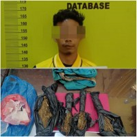 Salah Satu Pelaku TP Narkotika Jenis Daun Ganja Kering Di Amankan Polsek Rambah