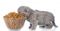 8 Rekomendasi Makanan Kucing Terbaik dan Menyehatkan