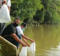Bupati Kuansing Tebar Delapan Ribu Ekor Benih Ikan  di Desa Pangkal Indrarung