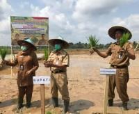 Bupati Kuansing Mursini Tanam Padi Perdana Di Desa Teberau Panjang