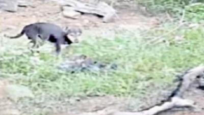 Ngeri ! Kematian Akibat Covid-19 di India Tak Terbendung, Mayat Bergelimpangan dan ada Dimakan Anjing Liar
