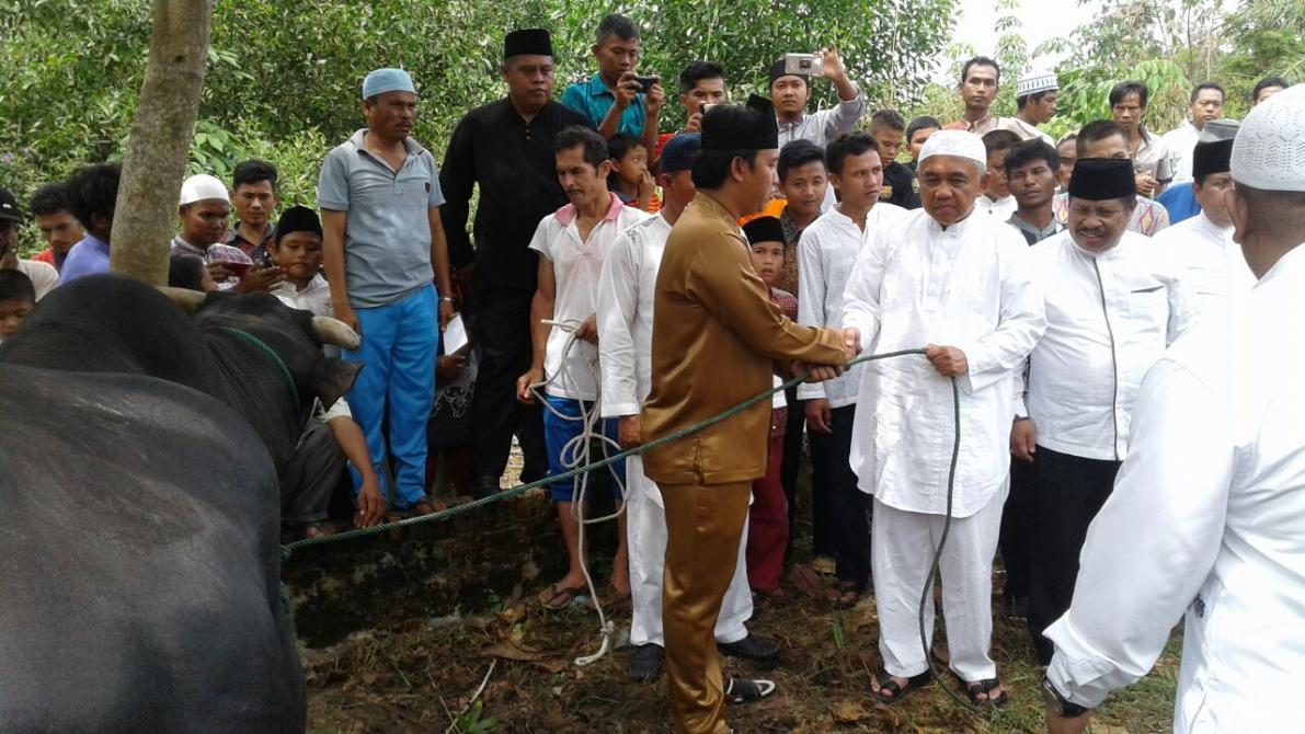 Penyerahan Sapi kurban oleh Gubri Andi Rachman kepada Warga RW 01 Kelurahan Patang Pudu.